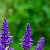 紫 花 緑